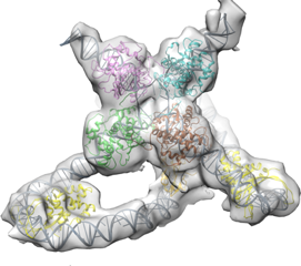 Holliday Junction, a protein complex that aids in genetic recombination.