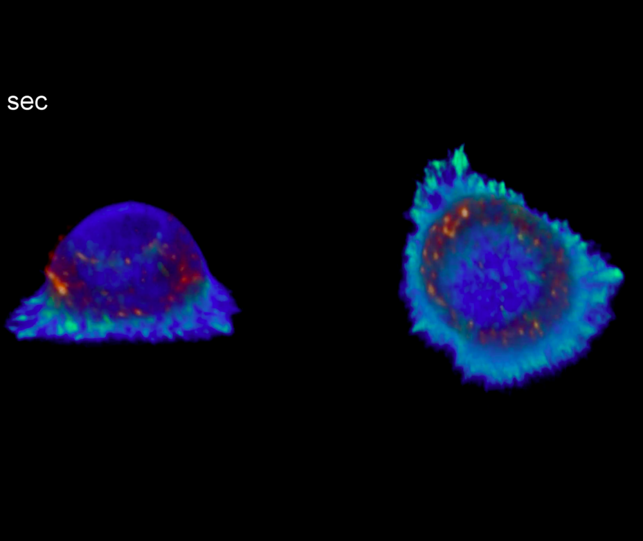 Capturing T-cell activation on treated substrates.