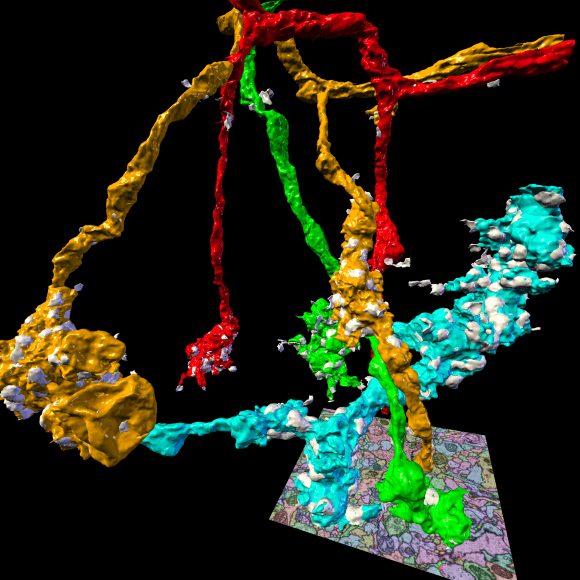 Automatic connectome reconstruction from ssTEM