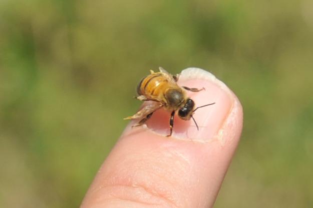 Community Beehives